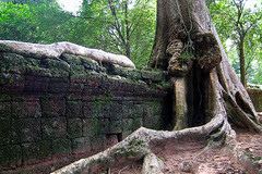 Ta Prohm - Destructive tree (Drriss & Marrionn) Tags: city travel temple cambodia southeastasia buddhist ruin siemreap angkor taprohm hindu unescoworldheritage archeologicalsite khmerarchitecture