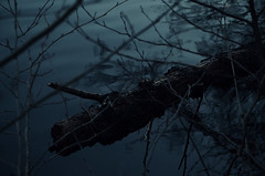 Krokodil (green edlihtam) Tags: wood winter nature water forest dark nikon hiver smooth atmosphere icy fort bois glac doux flottant nikond5100