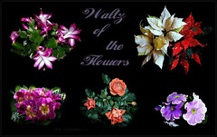 Happy Week!.......:) (ljucsu) Tags: ringexcellence dblringexcellence tplringexcellence eltringexcellence flowers~collage