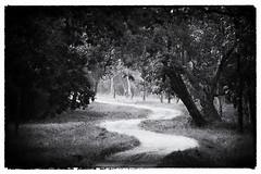 tadoba_track_bw-001 (Two Dragons - @robthomasphoto) Tags: park india nature fauna rural jeep natural january environment maharashtra tadoba tadobatigerreserve
