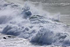 Surf at Point Bonita - 7 (fksr) Tags: california surf seagull marincounty marinheadlands breaker bigwaves pointbonita largewaves