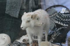 Mary had a two-headed little lamb (1987porsche944) Tags: wool window iceland store sheep reykjavik lamb 2010 img2818 twoheadedlamb icelandicwool