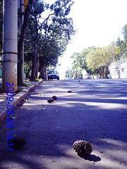 Pinhas Cadas - Foto by Nadir Silveira Dias (Nadir Silveira Dias) Tags: pinhas cadas