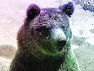 #CrazyCamera bear