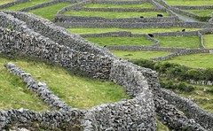Wallpaper .... (dorrisd- unable to comment-sorry) Tags: ireland panorama irish galway landscape island bay republic view cows dominate stones fields layers walls crows patches inisheer aran walled eiland ierland penalservitude muurtjes laboured dwangarbeid iers img6029 manbuilt mienekeandewegvanrijn