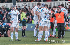 Welsh_Si - DSC_0377 - February 01, 2015 (Welsh_Si) Tags: rugby dragons competition exeter newport adamhughes chiefs gwent lvcup
