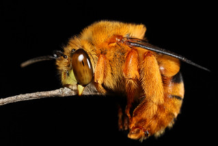 Cute sleeping bee