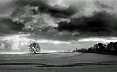 Lone tree - Explored thanks. (jimj0will) Tags: uk greatbritain england bw tree monochrome clouds rural landscape countryside blackwhite stormy explore essex scenics hydehall