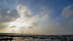 Gaomei Wetland in Taichung (PenFei Wang) Tags: taiwan tokina1224 taichung  wetland  gaomei  d5300