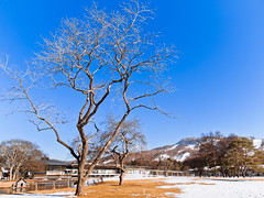 () Tags: snow tree japan olympus villa  zuiko outlet e30 refection   1454