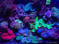 Violacé (josboyer) Tags: aquarium town purple du cape sud afrique