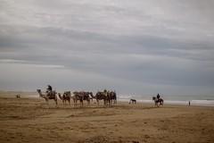 la caravane (cafard cosmique) Tags: africa portrait mer port portraits photography photo foto image northafrica retrato portrt morocco maroc maghreb portret marruecos ritratto essaouira marokko marrocos afrique caravane dromadaire mdina