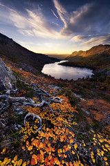 Remnant (hillsee) Tags: autumn lake mountains colour fall sunrise flora australia alpine deciduous beech fagus hansons nothofagus gondwanaland cradlemountainnationalpark gunii tasnmania