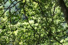 Untitled (/KENTAMA) Tags: green forest spring woods earlysummer