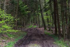Forest Path - April 2016 (boettcher.photography) Tags: nature forest germany deutschland natur wald weg pfad badenwrttemberg sashahasha boettcherphotography