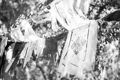 Tattered Prayers (Khris Robinson) Tags: blackandwhite bw monochrome outdoors outdoor prayer flags
