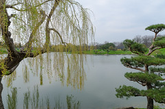 Spring in Japanese Garden (Igor Sorokin) Tags: travel usa lake chicago reflection water clouds garden landscape japanese us spring nikon zoom scenic sigma telephoto willow pines dslr botanicgarden 1770 d7000
