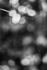 Triforce (belleshaw) Tags: blackandwhite abstract detail lines bokeh silk angles intersection spiderwebs threads taut ranchosantaanabotanicgarden