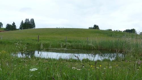 Teich vor Eschach