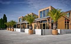 - palm (no) beach potsdam I - (-wendenlook-) Tags: color colors architecture bluesky olympus palm panasonic architektur potsdam blauerhimmel palmen 1718 gm1