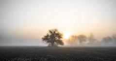 FIELD IN  MORNING FOG (S A F I R E) Tags: sun mist tree field fog sunrise landscape ottawa safire safirephoto