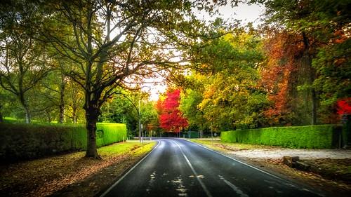 Mt Macedon Autumn Colours-12