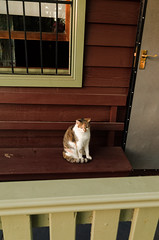 Cat on the Porch (Markus Jaaske) Tags: door portrait pet house home beautiful animal cat studio fur mammal eyes furry kitten feline sitting adult expression background tabby tail entrance adorable kitty nopeople whiskers indoors domestic porch stare shorthair breed creature puss vertebrate oneanimal domesticanimal