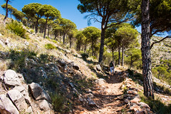 Hiking in the Sierra Mijas (Keith in Exeter) Tags: mountain hot tree weather walking landscape spain mediterranean outdoor hiking path fine sunny trail shade andalusia steep mijas aleppopine pinushalepensis sierramijas