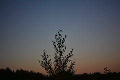 I stand alone (the_anachronist) Tags: blue light sunset sky orange black tree nature field forest woodland outdoors evening countryside woods nikon britain dusk earth yorkshire gradient nikkor