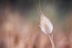 sparkle (salalstudio) Tags: macro grass droplets raindrops