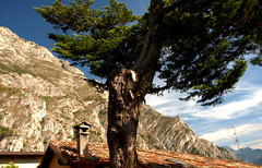 An old tree (mm.zajac) Tags: roof chimney sky mountains tree clouds top hill berge dach baum kamin
