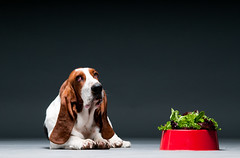 Lo que s puede y debe comer tu perro (Tu Nexo De) Tags: perros mascotas alimentos tunexodeactionanatomyanimalanimalbodyanimalearanimalmuscleanimalshuntingbassethoundbrowncaninecutedogeatingfoodhealthyeatinghorizontalhoundindoorsisolatedlettucelookingatcameramammalnobodypetsphotographyportraitpurebred