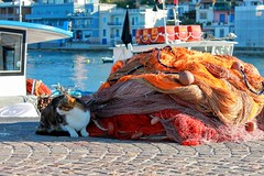 Love (alessandravallante) Tags: camera blue sea orange love colors cat boat photo fisherman marine feline barca cam felini fishnets gatto arancio reti pescatori