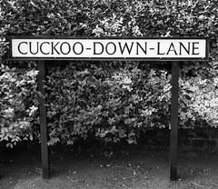 Cuckoo-Down-Lane (cocabeenslinky) Tags: road street uk england blackandwhite white black art sign garden lumix photography blackwhite kent seaside post photos may panasonic whitstable 2016 of dmcg6 cocabeenslinky cuckoodownlane