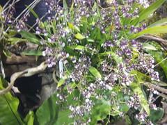IMG_20160321_111604 (Sasha India) Tags: flowers orchid thailand orchids bangkok exibition apoc   apoc12