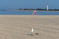 Cape May Beach Scene (WMJ614) Tags: ocean shadow sky sun lighthouse hot bird beach water landscape lumix boat stand newjersey sand chair seagull gull salt lifeguard panasonic capemay peninsula fz1000