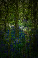 Burton Bushes (David W Tait) Tags: trees abstract blur bluebells woods path overlay textures layers bushes beverley burton