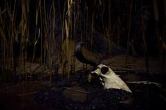 death (daniel gigliotti2012) Tags: light nature night death skull xpro fuji ngc s morte fujifilm luci ossa xphotographer xpro1 xf27 xphotographi