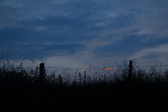 Barbed wire (Florian Btow) Tags: wood blue light sunset sky sun beautiful grass clouds golden wire glow hour barbed brusch
