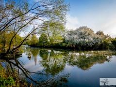 River Great Ouse, Willington, Bedfordshire (Rob Felton) Tags: bridge sun mist tree bedford outdoor bedfordshire serene felton refelection willington greatouse robertfelton bedfordrivervalleypark