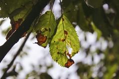 Parc De Biez - Mondeville (CyndiieDel) Tags: france macro nature normandie extrieur arbre parc calvados mondeville bassenormandie parcdebiez