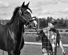 Race Horse #3 (mfenne) Tags: leica horse washington images racing marlowe monochrom fenne longacres drala