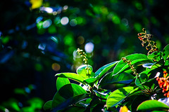 Nance (JoanZoniga) Tags: travel flowers light sunset flores green home leaves canon atardecer costarica bokeh explore atenas discover puravida nance canoneos100d canoneoskissx7 jczuniga