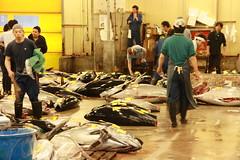 IMG_5888 (tsaaby) Tags: japan fishmarket fisk fiskemarked tmfstudietur