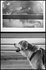 "25/52 Nick`s Look At ""Forgotten Memory II"" by Kjell Nupen (fotografier/images) Tags: leica art goldenretriever golden graphics gallery canine retriever sl inside solibrug leicasl aposummicron kjellnupen 52weeksfordogs aposummicron50mm"