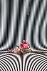 Magnolie vor Streifen, 2016 (Lexi Blue) Tags: pink stilllife flower stripes rosa objects stilleben magnolia colored stillife blume arrangement bunt abstrakt arranged streifen magnolie gestaltung gestaltet angeordnet objektfotografie arrangiert arrangedobjects canon6dmark3