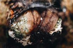 Slug. (Dorian-G) Tags: new macro nature animal closeup zealand keri slug
