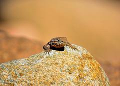 The Sneak Peak (vgphotoz) Tags: vgphotoz asneakpeak lizard peak cliffhanger hangout arizona lake bartlett head pretty phoenix nature rock usa portrait