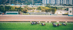 (Jacz Tse) Tags: life travel horse hk green animal sport canon fun hongkong eos 50mm afternoon weekend lifestyle 50mm14 riding passion 5d horseracing speedy powerful racecourse racehorse shatin horsepower gallop jh hkjc 852 inmylife sundy 5dmarkii horsephotograph withhen