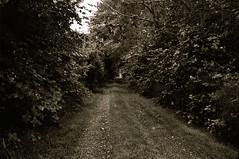 The Lane 3 (Nicholas Lyle) Tags: k1000 pentaxk1000 ilfordxp2super primefilmxe vivitar35mm28m42